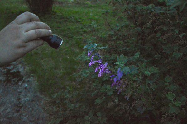 Botanikos sode pasinėrė į žavingą švytinčių organizmų pasaulį