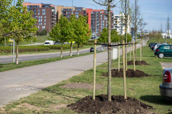 Šį pavasarį Vilniuje sodinama daugiau kaip 3 tūkst. naujų želdinių