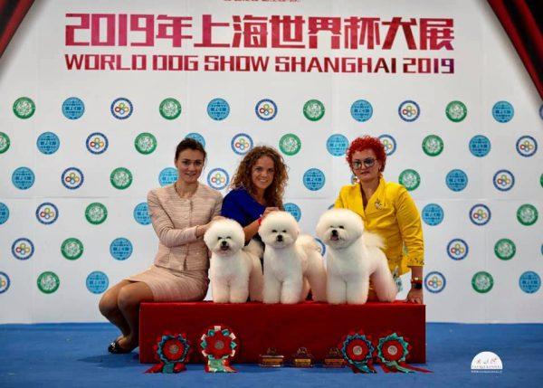 Bišonai parsivežė glėbį Pasaulio šunų parodos apdovanojimų