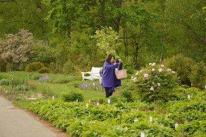 Botanikos sodas sukvietė į tarptautinę žavėjimosi augalais šventę