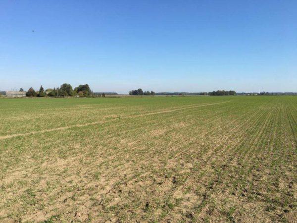Derlingo dirvožemio liko 60-čiai metų? Ekspertės patarimai, ko imtis