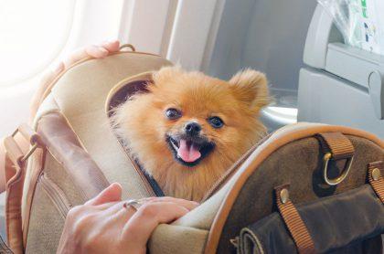 Patarimai kelionių ir gyvūnų mylėtojams – kaip pasiruošti skrydžiui lėktuvu drauge su augintiniu?