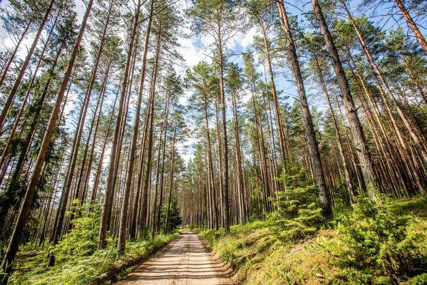 5 mitai apie miškus ir miškininkystę