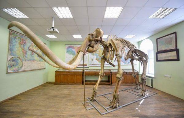 VU Geologijos muziejuje vėl galima išvysti mamuto Gošos griaučius ir sekti Vilniaus mamuto pėdsakais