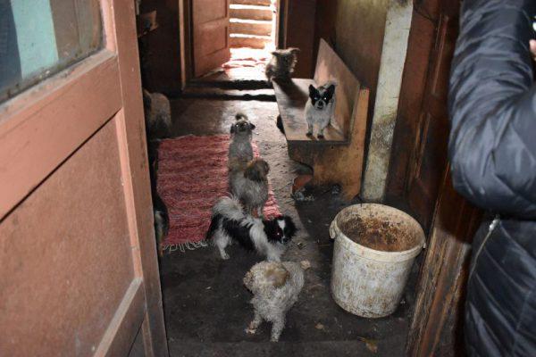"""Seimo narės Rasos Petrauskienės pranešimas: """"Nuplikę šuneliai, paskiepyti veterinaro. Kas prisiims atsakomybę?"""""""