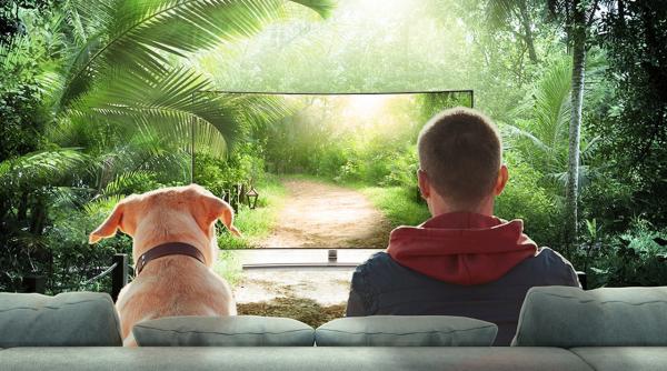 Ar šunys mato ir supranta tai, ką rodo televizorius?