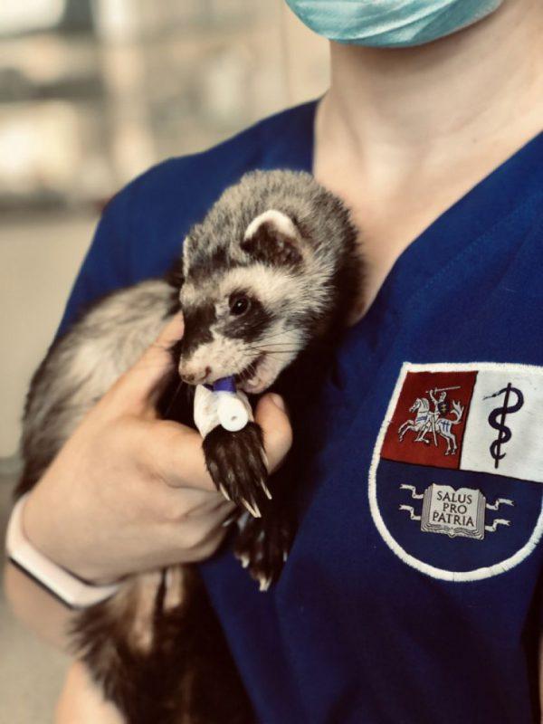 Smulkiųjų gyvūnų klinikoje – virtualiosios veterinarijos gydytojo konsultacijos