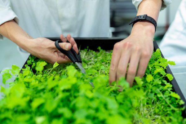Žemės ūkio projektų inovatyvumo vertinimas