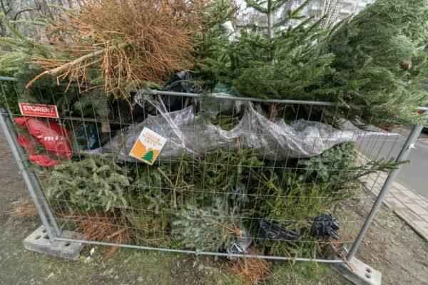 Sostinėje – 90 aikštelių nupuoštoms eglėms ir Kalėdų miškas – gyvoms