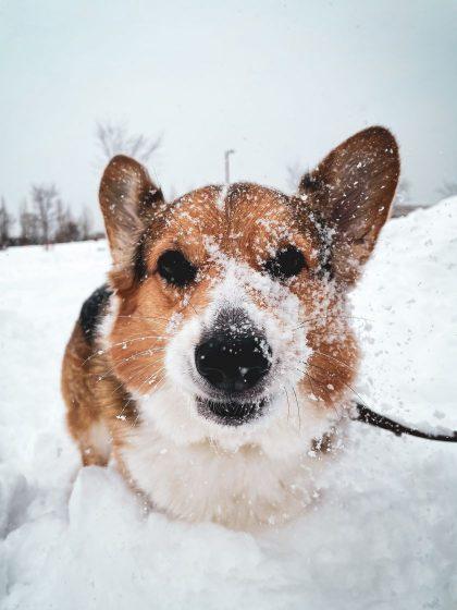 Žiema keturkojams – iššūkių metas: nusilpęs imunitetas gali tapti rimtų ligų priežastimi