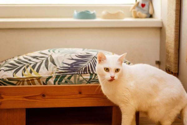 """Daugiau nei gyvūnų viešbutis: įgyvendinus """"Barkvilio"""" plėtrą laukia nauji pokyčiai"""
