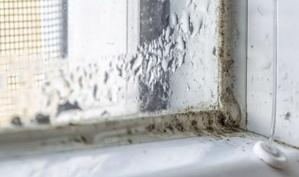 Kodėl svarbu pašalinti pelėsį ir ką apie jį reikia žinoti?