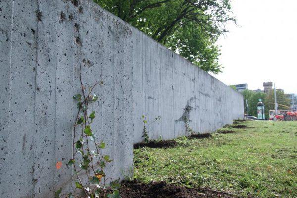 Naujas senas augalas Vilniuje – grafitininkų pamėgtas sienas miestas apsodinavijokliais