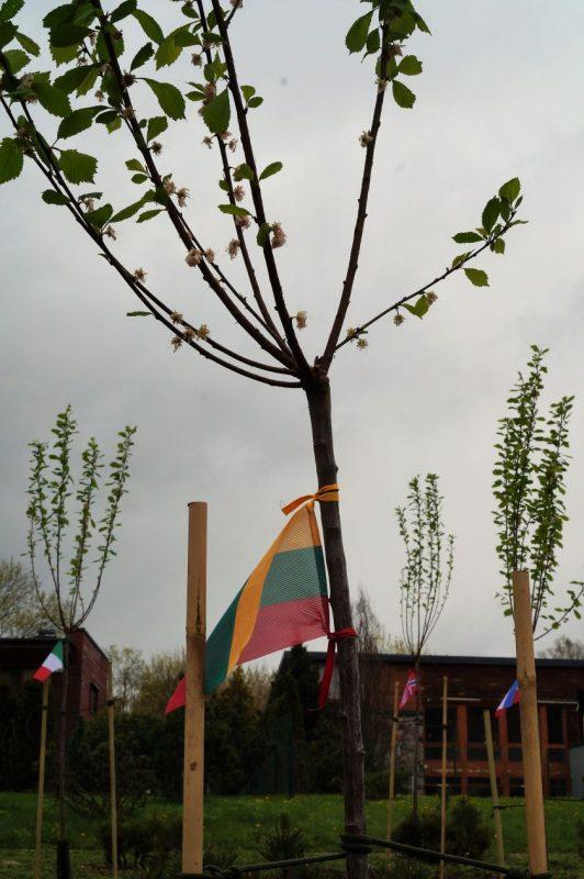 Švęsdamas Europos dieną Europos vartotojų centras Vilniuje pasodino migdolų parką