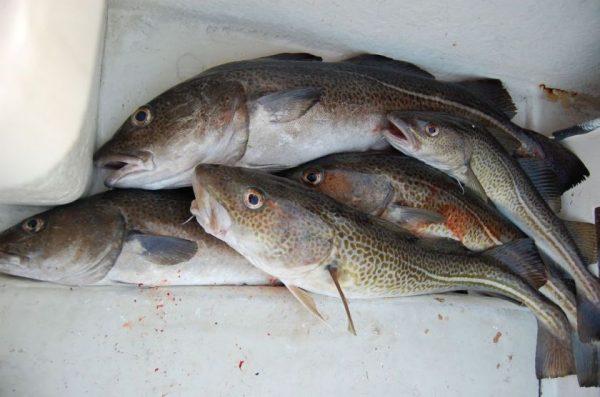 """Atnaujintos gido """"Nyksta žuvys"""" rekomendacijos: ką rinktis ir ko atsisakyti?"""