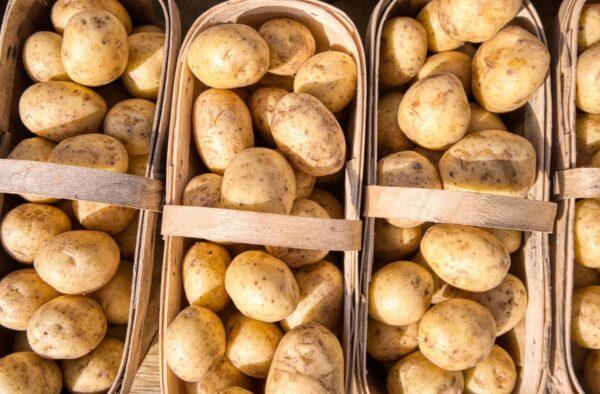 Pirmosios lietuviškos šviežios bulvės jau pasiekė parduotuvių lentynas – kilogramo kaina 1,29 Eur
